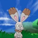 Bunnelby_screen01_Pokemon_X-e-Y_pokemontimes-it