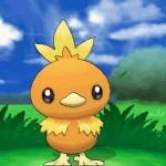 Torchic_Pokemon_X-e-Y_pokemontimes-it