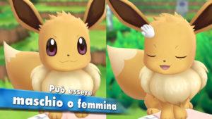 eevee_differenza_maschio_femmina_lets_go_pikachu_eevee_pokemontimes-it