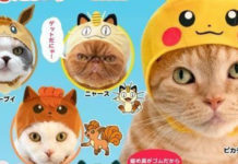 banner_berretti_gatti_pokemontimes-it