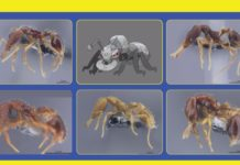 banner_nuove_specie_formiche_pokemontimes-it