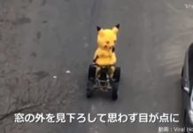 pikachu_fake_mascotte_guida_auto_mondo_pokemontimes-it